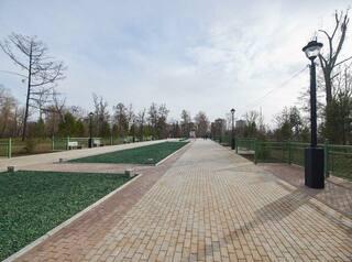 В Иркутске определят сроки замены всех старых деревьев