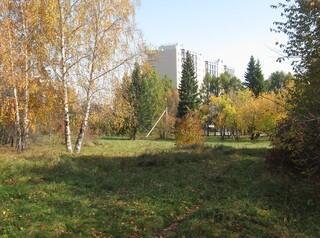 Иркутяне переживают за лес в Академгородке, где собираются строить межвузовский кампус
