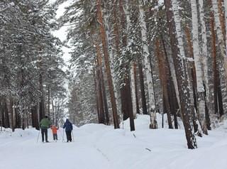 Жители Академгородка борются против застройки лесной зоны