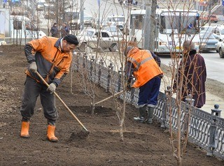 Для омских улиц в этом году приготовили 2100 новых деревьев
