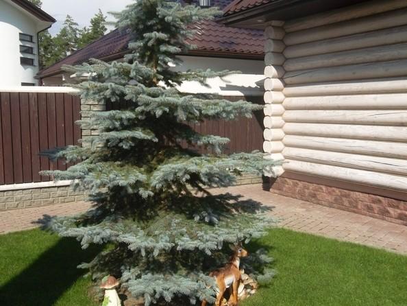 Продам коттедж, 352 м², Барнаул. Фото 5.