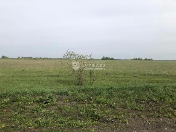 Продам  землю сельхозназначения, 366 соток, Кемерово. Фото 3.